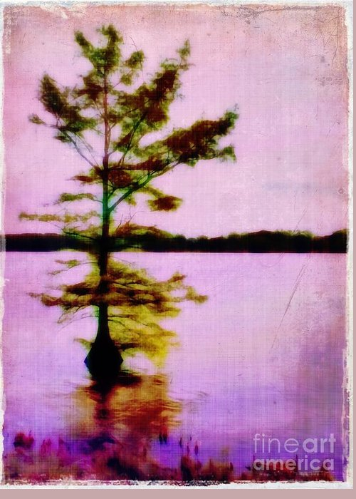 Louisiana Greeting Card featuring the photograph Lone Cypress by Judi Bagwell