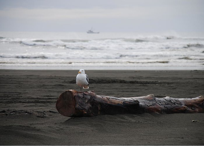 Gull Greeting Card featuring the photograph Lone Gull by Michael Merry