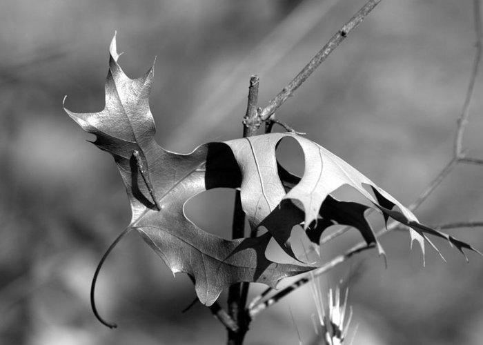 Leaf Greeting Card featuring the photograph Lone Leaf by Rick Rauzi