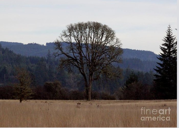 Meadow Greeting Card featuring the photograph Lone Meadow by Erica Hanel