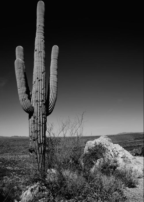 Saguaro Cactus Photographs Greeting Cards