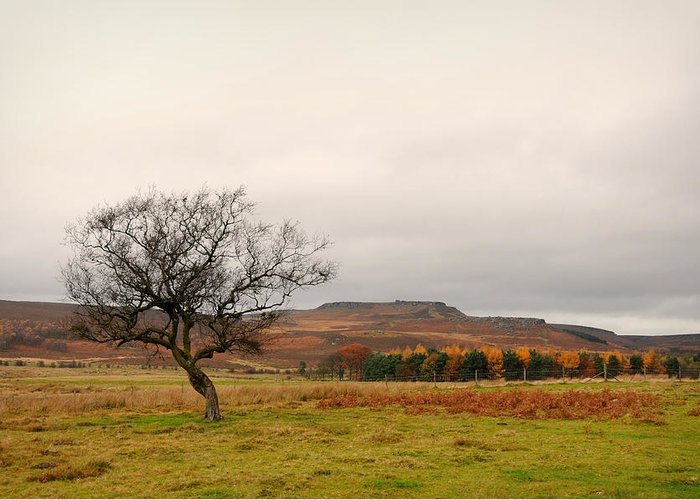 Derbyshire Greeting Card featuring the photograph Lone Tree And Higger Tor by Siobhan Brennan-Raymond