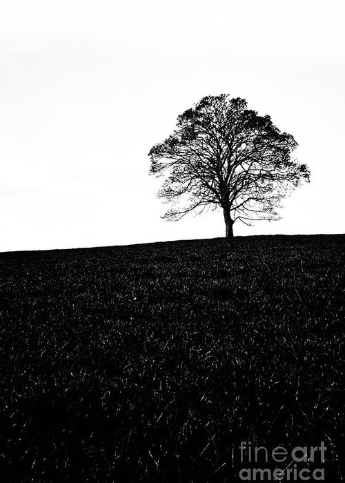 0 - 10bl 1000x Greeting Card featuring the photograph Lone Tree Black And White Silhouette by John Farnan