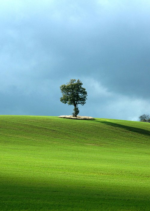 Lone Tree Greeting Card featuring the photograph Lone Tree Sintinel by Duncan Nelson