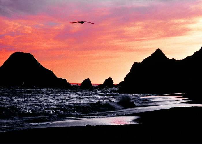 Pacific Ocean Greeting Card featuring the photograph Lonesome Gull by Mike Flynn