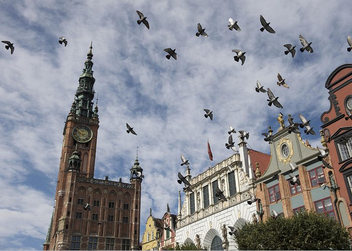 Animal Greeting Card featuring the photograph Long Market With Pigeons, Town Hall by Keenpress
