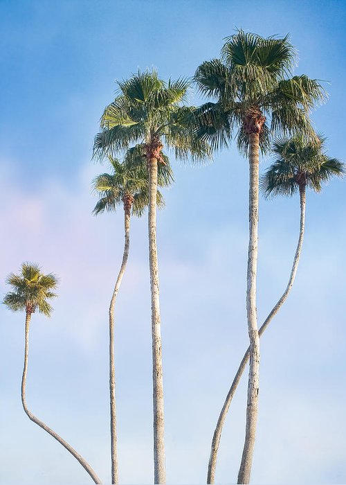 Palms Greeting Card featuring the photograph Long Necks by Stephen Warren