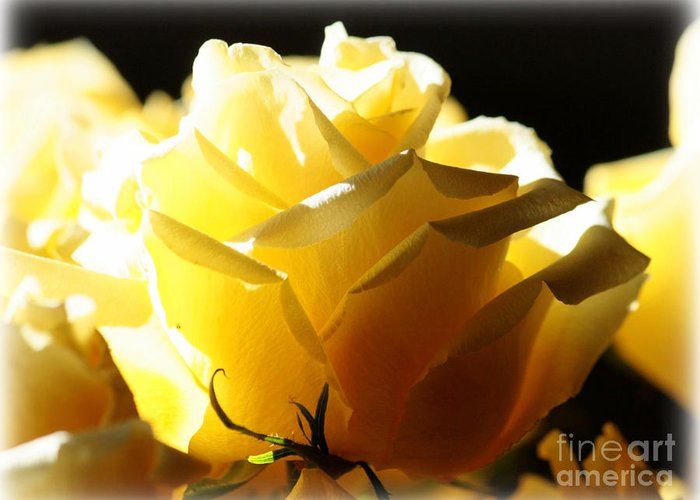 Yellow Rose Greeting Card featuring the photograph Look On The Bright Side by Carol Groenen