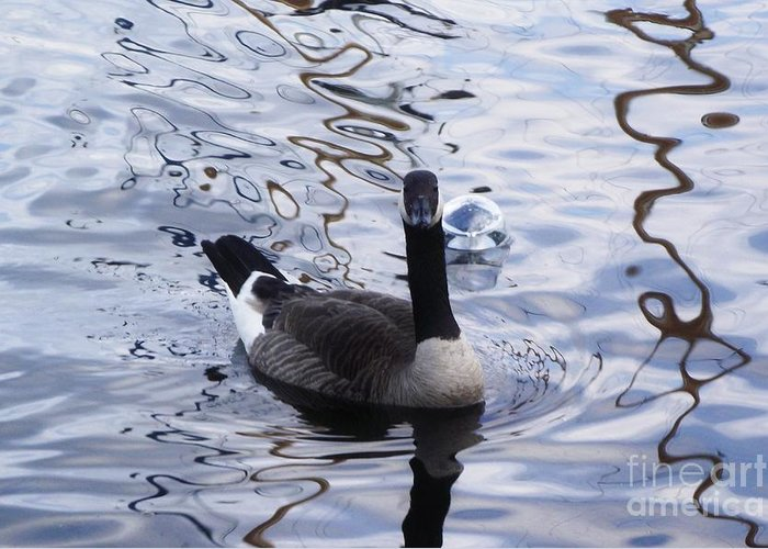 Duck Greeting Card featuring the photograph Looking At You by Wendy Martin