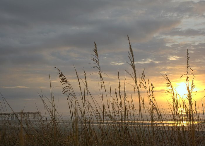 Pier Greeting Card featuring the photograph Looking Back by Lynn Davenport