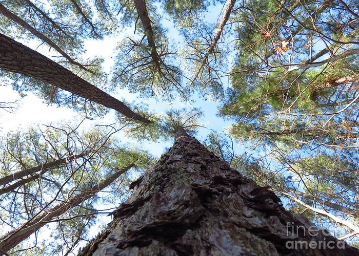 Trees Greeting Card featuring the photograph Looking up by Rrrose Pix
