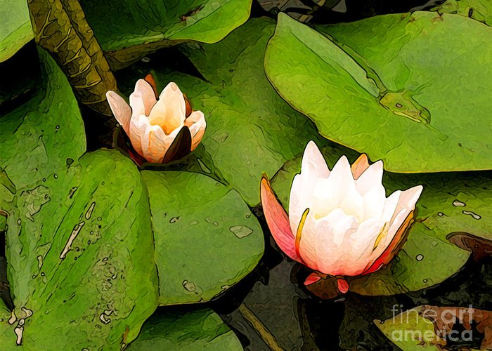 Water Lilly Greeting Card featuring the photograph Lotus B Position by Charlie Spear