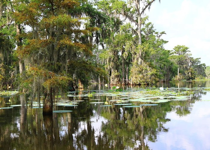 Lake Greeting Card featuring the photograph Louisiana by Linda Alexander