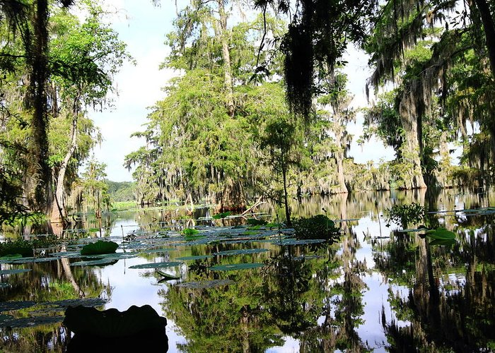 Lake Greeting Card featuring the photograph Louisiana Reflections by Linda Alexander