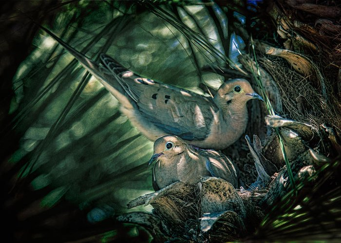 Dove Greeting Card featuring the photograph Love A Dove Dove by Chris Lord
