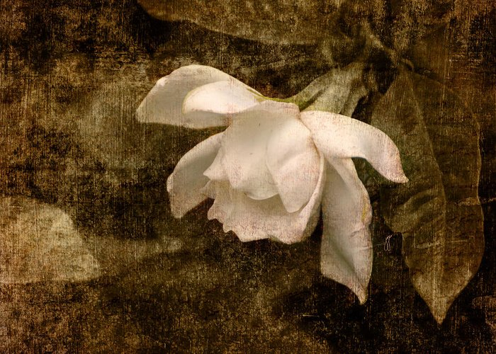 Antique Greeting Card featuring the photograph Love Letter Ix Cape Jasmine Gardenia by Jai Johnson