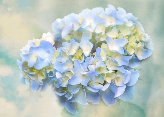 Antique Greeting Card featuring the photograph Love Letter Vii Hydrangea by Jai Johnson