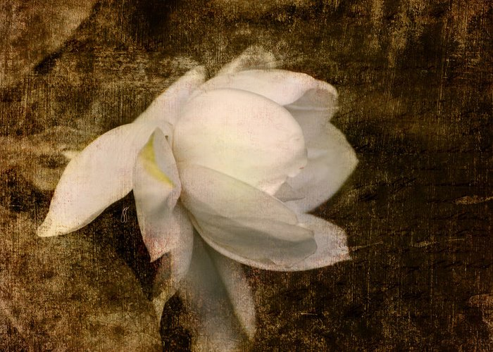 Antique Greeting Card featuring the photograph Love Letter Viii Cape Jasmine Gardenia by Jai Johnson