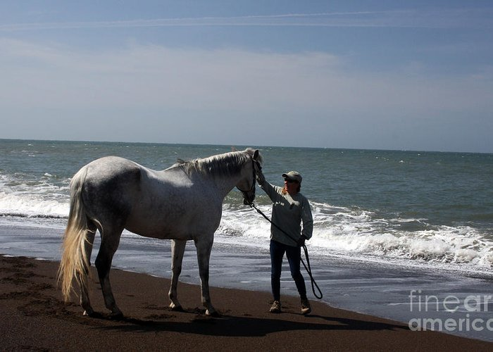 Horse Greeting Card featuring the photograph Love's Touch by Juan Romagosa