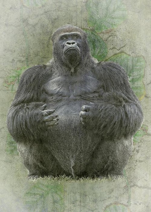 Gorilla Greeting Card featuring the photograph Lowland Silverback Gorilla by Rudy Umans
