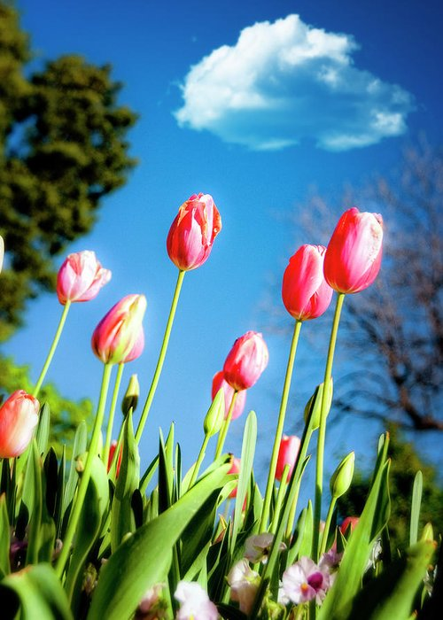 Tulips Greeting Card featuring the photograph Lucy In The Sky by Tamyra Ayles
