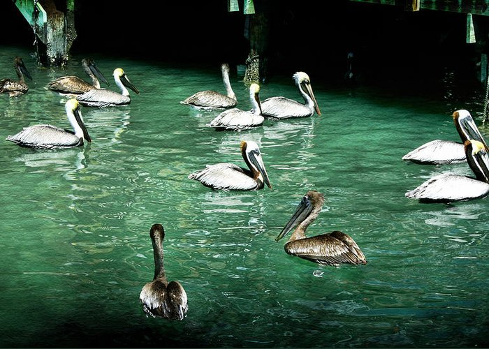 Pelican Greeting Card featuring the photograph Lunch Crowd by Ellen Heaverlo