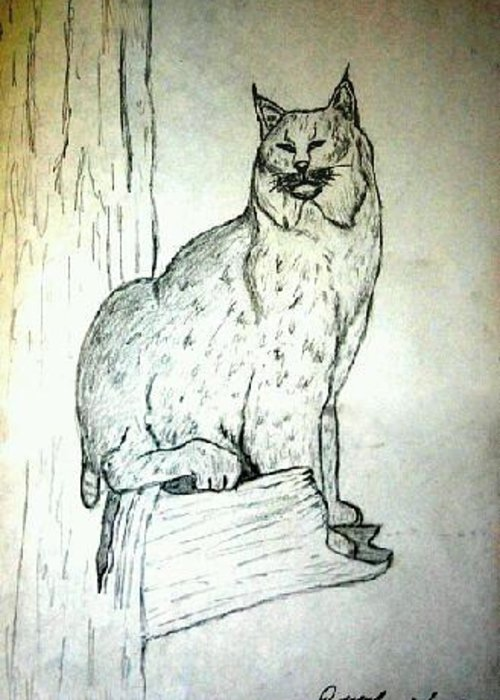 Greeting Card featuring the drawing Lynx by Damani McCormick