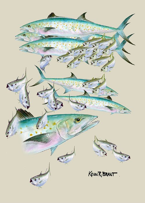 Mackerel Greeting Card featuring the painting Mackerel Montage by Kevin Brant