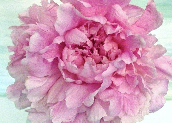 Photo Greeting Card featuring the photograph Macro Peony Abstract by Marsha Heiken