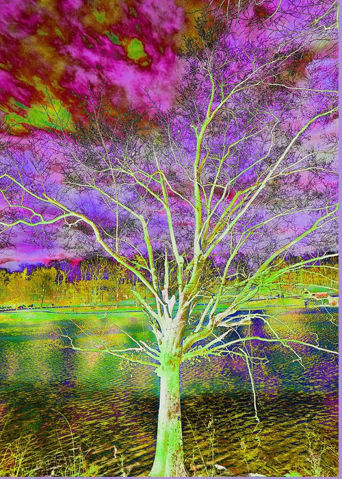 Tree Greeting Card featuring the photograph Magical Tree 4 by Sheila Kay McIntyre