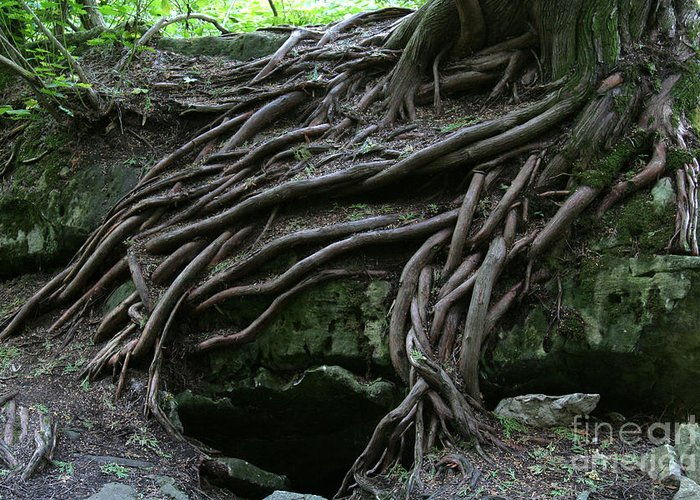 Roots Greeting Card featuring the photograph Magical Tree Roots by Chris Hill