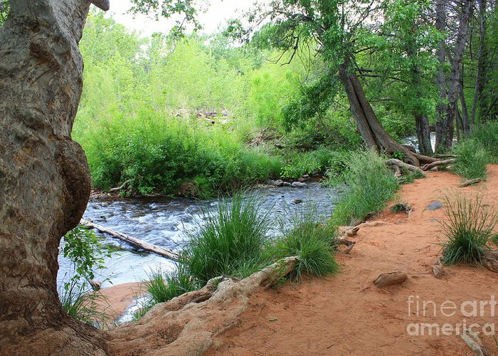 Arizona Landscape Greeting Card featuring the photograph Magical Trees At Red Rock Crossing by Carol Groenen