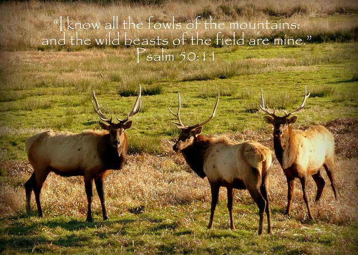 Cindy Greeting Card featuring the photograph Magnificent Bull Elk Psalm 50 by Cindy Wright