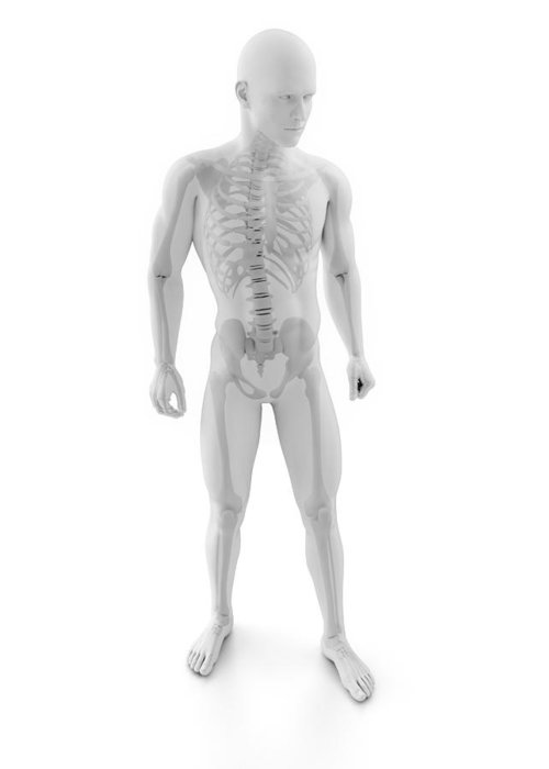 Artwork Greeting Card featuring the photograph Male Skeleton, Artwork by Sciepro