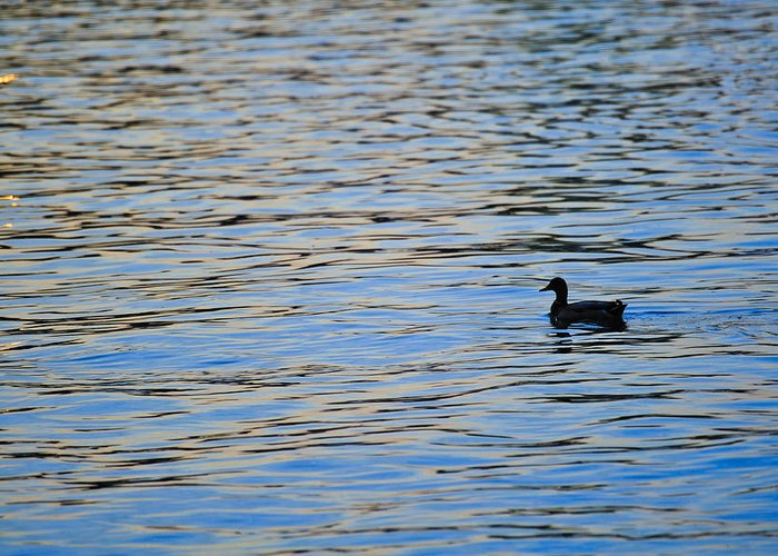 America Greeting Card featuring the photograph Mallard Duck And Blue Water by Marianne Campolongo