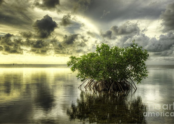 Mangrove Greeting Card featuring the photograph Mangroves I by Bruce Bain