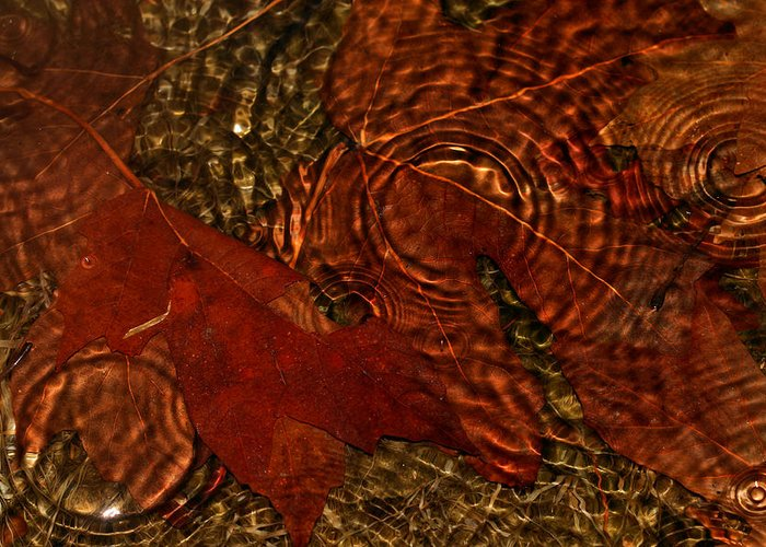 Maple Leaves Greeting Card featuring the photograph Maple Leaves In The Rain by Tracie Kaska