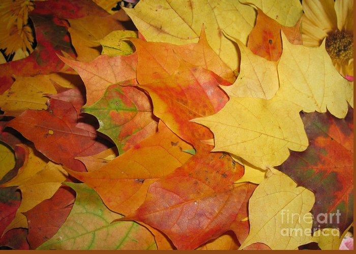 Fall Greeting Card featuring the photograph Maple Rainbow by Ausra Huntington nee Paulauskaite
