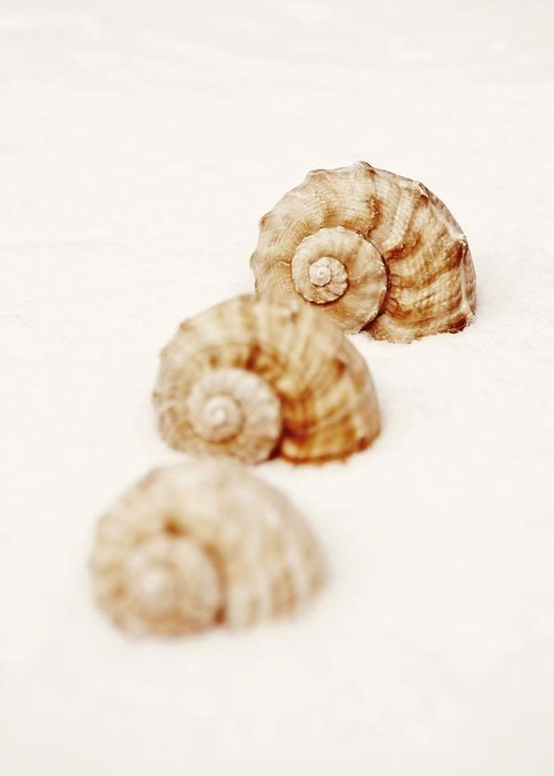 Marine Snail Greeting Card featuring the photograph Marine Snails by Joana Kruse