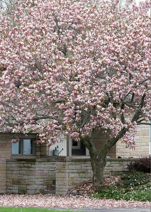 Marinette Greeting Card featuring the photograph Marinette Magnolia by Mark J Seefeldt