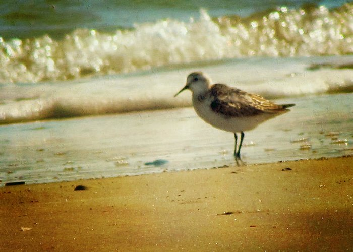 Sea Gull Greeting Card featuring the photograph Memories Of Summer by Amy Tyler