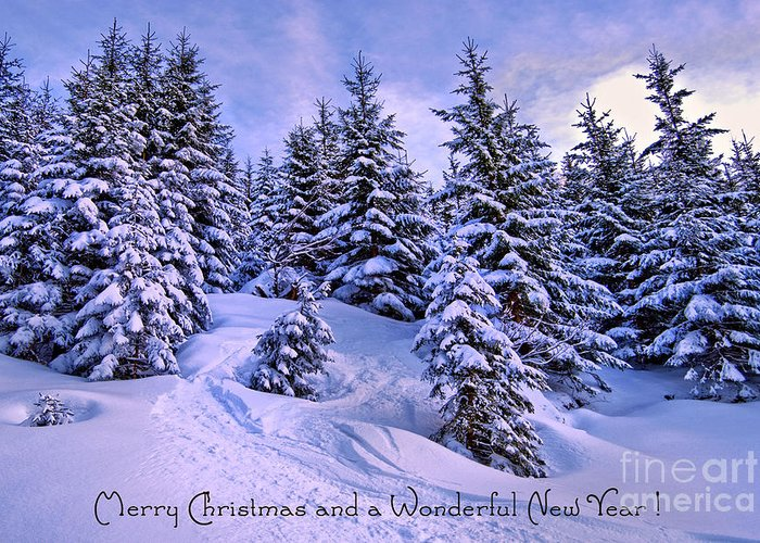 Winter Greeting Card featuring the photograph Merry Christmas And A Wonderful New Year by Sabine Jacobs