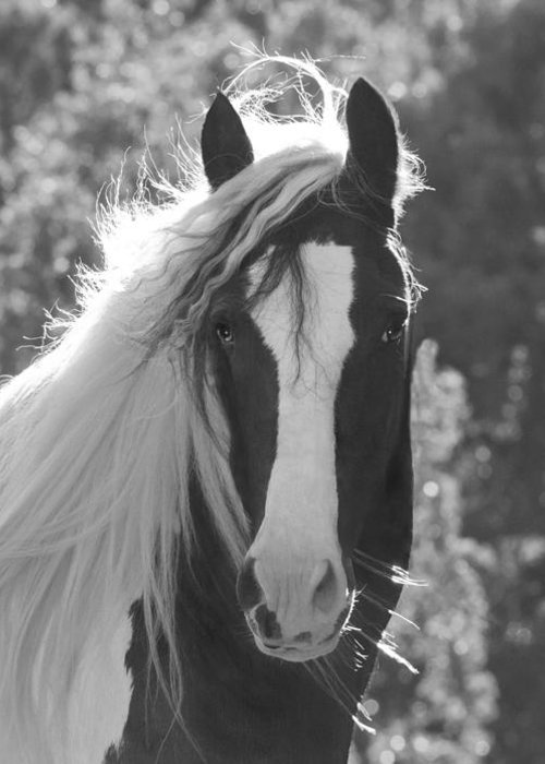 Equine Greeting Card featuring the photograph Mesmerizing Eyes by Terry Kirkland Cook
