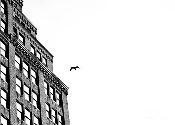 Black And White Bird Flight Building Clean Bird Nature City Sky Greeting Card featuring the photograph Midday Flight by Darwin Lopez