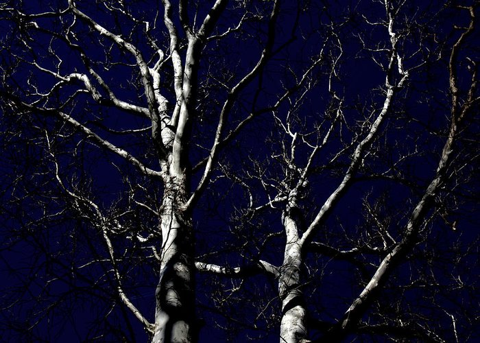 Midnight Blue Greeting Card featuring the photograph Midnight Blue by Ed Smith