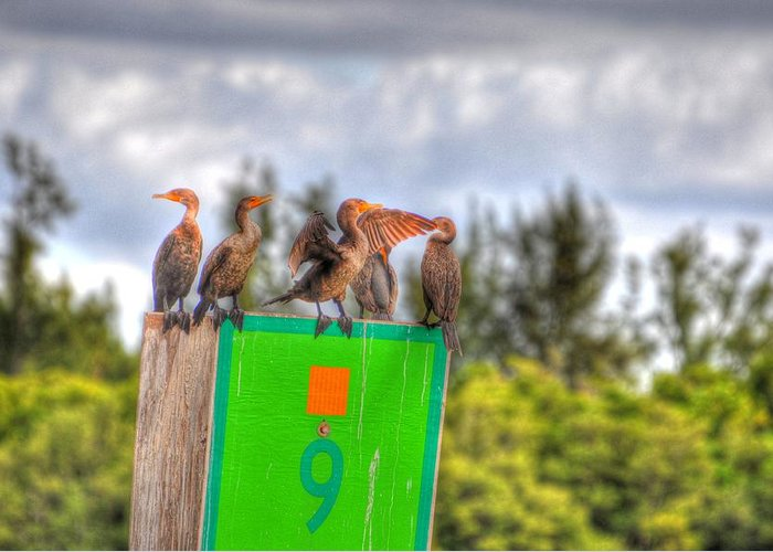 Great Blue Heron Greeting Card featuring the digital art Mine by Barry R Jones Jr