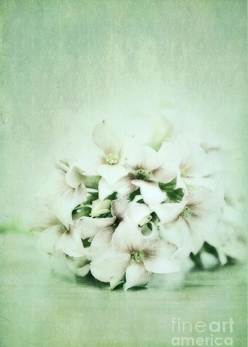 Kalanchoe Greeting Card featuring the photograph Mint Green by Priska Wettstein