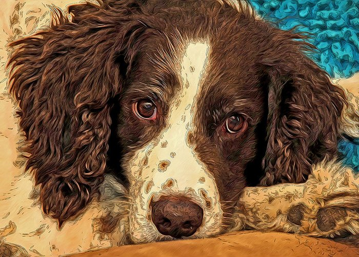 Mixed Media Photography. Mixed Media. Mixed Media Art. Bird Dog Greeting Cards. Bird Dog Photography. Bird Dog Wall Art. Bird Dog Hunting. Bird Dog Camping. Bird Dog Playing. Bird Dog Sleeping. Greeting Card featuring the photograph Missing Jared by James Steele