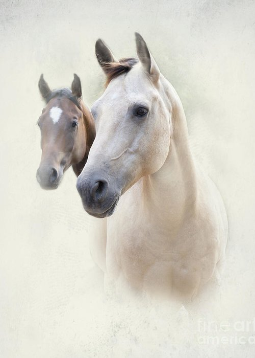 Horse Greeting Card featuring the photograph Misty by Betty LaRue