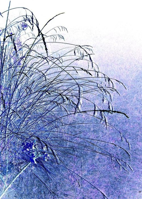 Misty Blue Greeting Card featuring the photograph Misty Blue by Will Borden
